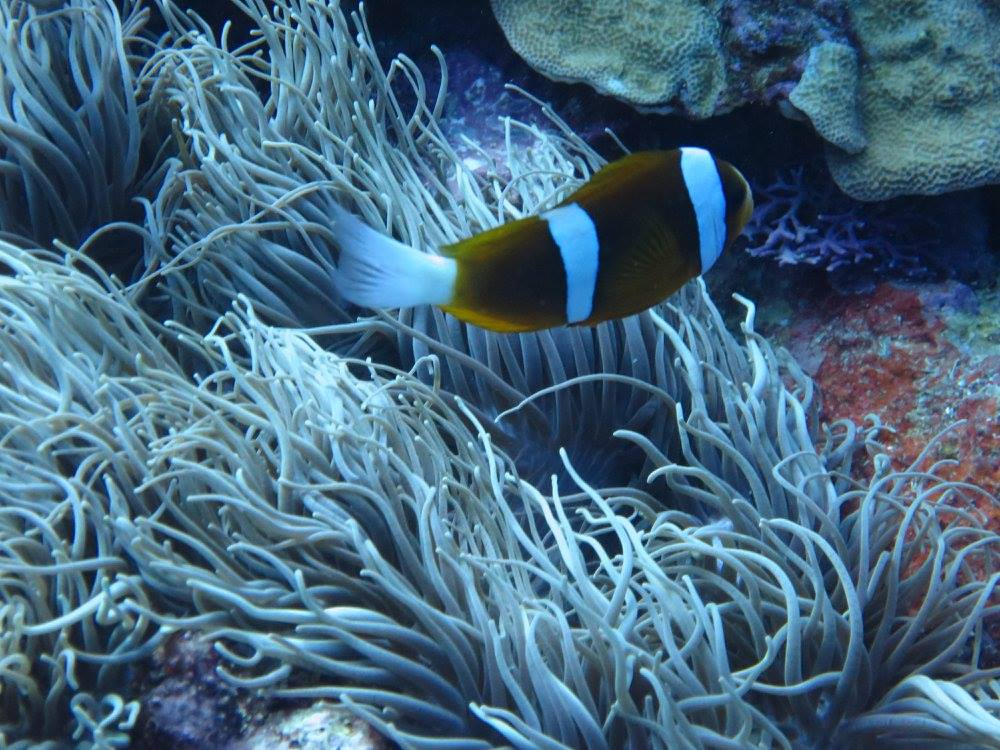 Nemo und so!